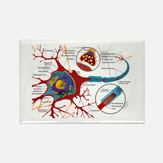 Neuron cell Rectangle Magnet