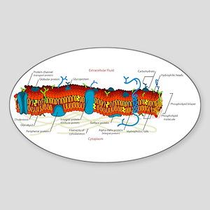 Cell Membrane Oval Sticker