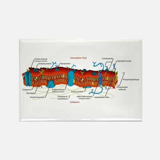 Cell Membrane Rectangle Magnet