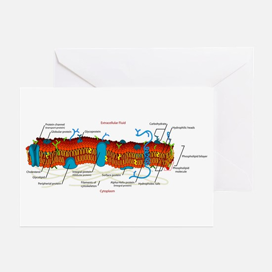 Cell Membrane Greeting Cards (Pk of 10)