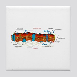 Cell Membrane Tile Coaster