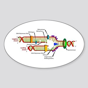 DNA Synthesis Oval Sticker