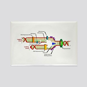 DNA Synthesis Rectangle Magnet