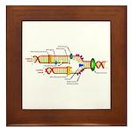 DNA Synthesis Framed Tile