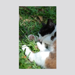 Feral Cat Colony Rectangle Sticker