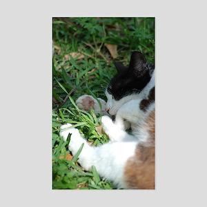 Feral Cat Colony Rectangle Sticker