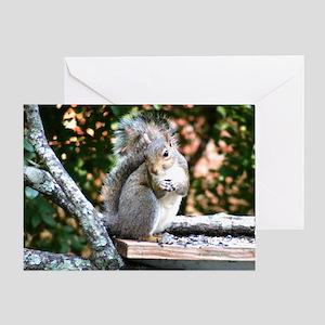 Sweet Squirrel Greeting Card