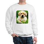 Yellow Labrador Puppy Sweatshirt