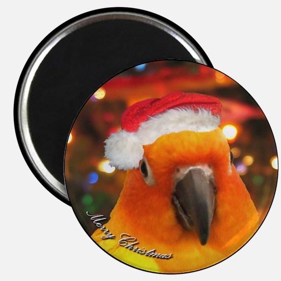 Santa Hat Sun Conure Christmas Magnet