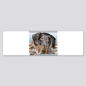 Speckled Dachshund Dogs Bumper Sticker