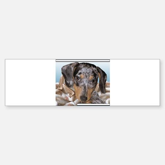 Speckled Dachshund Dogs Bumper Bumper Bumper Sticker