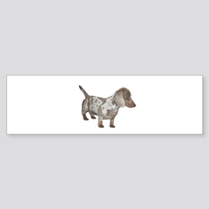Speckled Dachshund Dog Bumper Sticker