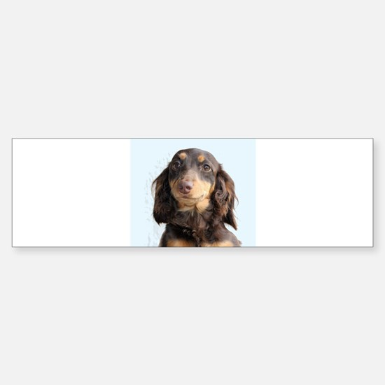 Long Hair Doxie Bumper Bumper Bumper Sticker