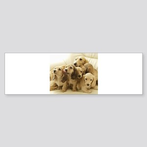 Longhair Dachshunds Bumper Sticker