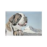 Saint Bernard Rectangle Magnet (10 pack)
