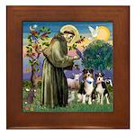St Francis & 2 Tri Aussies Framed Tile