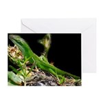 Anole at Night Greeting Card