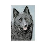 Schipperke Rectangle Magnet (100 pack)