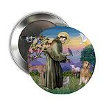 St Francis Golden Button
