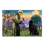 Saint Francis' Newfie Postcards (Package of 8)