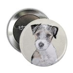 Russell Terrier (Rough) 2.25