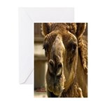 Kiss Me! Greeting Cards (Pk of 10)