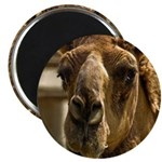 """Kiss Me! 2.25"""" Magnet (10 pack)"""