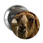 """Kiss Me! 2.25"""" Button (10 pack)"""