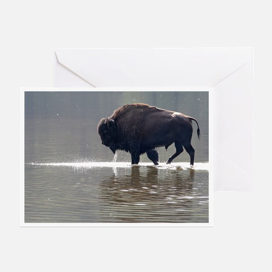 Backlit Bison Greeting Cards (Pk of 20)