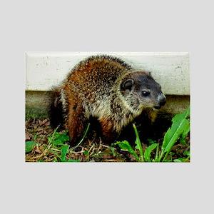 Baby Groundhog Digital Photo Rectangle Magnet