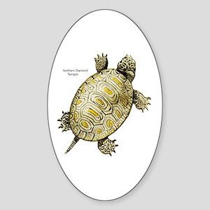Diamondback Terrapin Oval Sticker