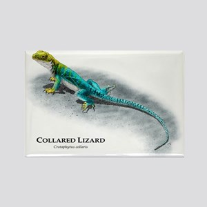 Collared Lizard Rectangle Magnet