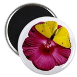 Cloudless Sulfur and Red Hibiscus Magnet
