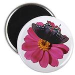 Spicebush Swallowtail and Pink Zinnia