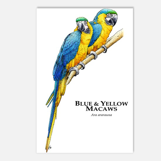 Blue & Yellow Macaws Postcards (Package of 8)