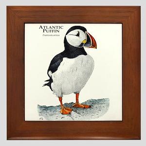 Atlantic Puffin Framed Tile