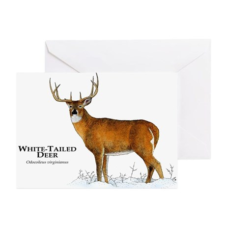 White-Tailed Deer Greeting Cards (Pk of 20)