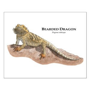 Bearded Dragon Posters Cafepress