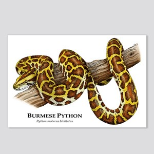 Burmese Python Postcards (Package of 8)