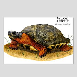 Wood Turtle Postcards (Package of 8)