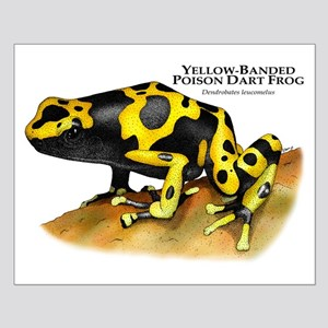 Yellow-Banded Poison Dart Fro Small Poster