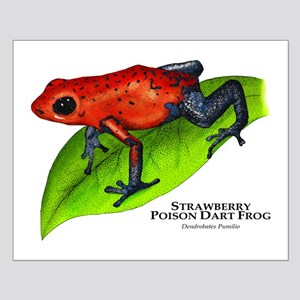 Strawberry Poison Dart Frog Small Poster