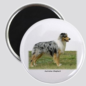 Australian Shepherd 9K7D-20 Magnet