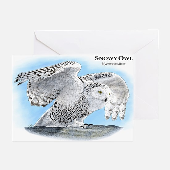 Snowy Owl Greeting Cards (Pk of 10)