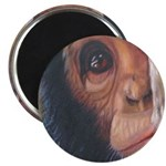 """""""Shy"""" 2.25"""" Magnet (10 pack)"""