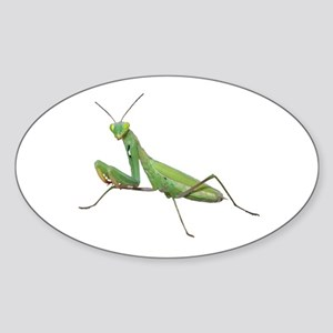Praying Mantis Oval Sticker