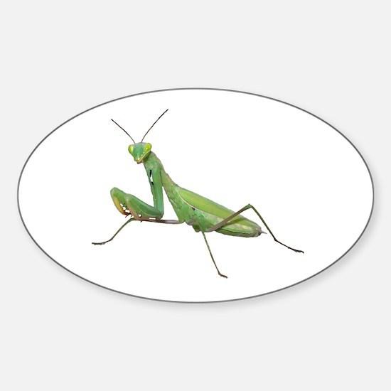 Praying Mantis Oval Decal