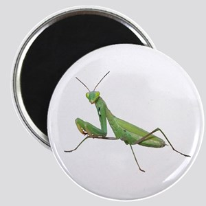 Praying Mantis Magnet