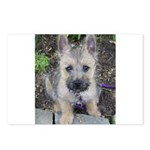 """Cairn Terrier """"Emma"""" Postcards (Package of 8)"""