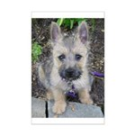 "Cairn Terrier ""Emma"" Mini Poster Print"